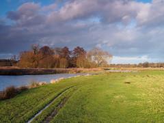 River Wey at Walsham Meadow-EC290185-Edit (tony.rummery) Tags: em10 evening eveningsun mft microfourthirds nationaltrust omd olympus pyrford riverwey towpath winter woking ripley england unitedkingdom gb