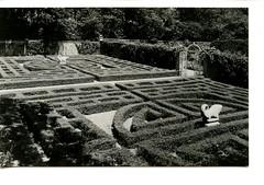 Allerton Park Hedge Maze Garden, B&W, Monticello, IL 1950s (RLWisegarver) Tags: piatt county history monticello illinois usa il