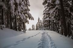Mount Rainier National Park Snowshoe (ChristinaForever) Tags: mountrainier nationalpark mrnp snowshoe winter mountains sky clouds snow trees landscape pnw
