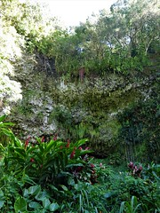 Wailua River State Park - Fern Grotto (16) (pensivelaw1) Tags: hawaii kauai wailuariverstatepark ferngrotto