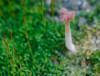 Diminuta (jmriaran1) Tags: seta musgo soto móstoles