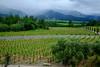 Napa Valley Vineyards in California (` Toshio ') Tags: toshio napa california vineyard wine mountain clouds trees nature fujixe2 xe2