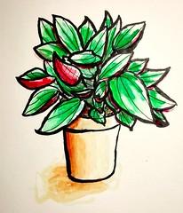 Petite plante. (cecile_halbert) Tags: dessin draw ink encre aquarelle watercolor croquis sketch sketcher sketching sketchbook carnet plante plant art artbook artjournal artdiary journaling journaladdict journalling nature botanical botanique