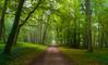 Tal vez, podría perderme (Jesus_l) Tags: europa francia valledelloira castillodecenonceau bosque jesúsl