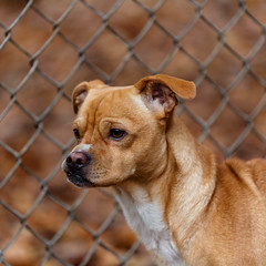 Little leggs17Dec201736.jpg (fredstrobel) Tags: dogs pawsatanta atlanta usa animals ga pets places pawsdogs decatur georgia unitedstates us