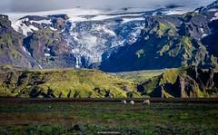 Paradise Iceland (bernd obervossbeck) Tags: island iceland landscape landschaft landscapephotography landschaftsfotografie berg berge mountain mountains gletscher glacier weide willow pasture pasturearea weidefläche schaf schafe sheep wasserfall waterfall eis ice schnee snow fujixt1 berndobervossbeck xf55200mmf3548
