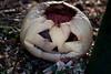 Will You? (Jules (Instagram = @photo_vamp)) Tags: pumpkin decay rotting jackolantern mold snow stuffinmybackyard december