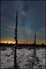 Night on the bog (Jonas Thomén) Tags: bog mosse winter vinter stars stjärnor snow snö trees träd vintergatan milkyway natt night