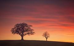Together Forever (Captain Nikon) Tags: sunset sundown silhouettes couple lonetrees melbourne derbyshire england greatbritain landscapephotography landscapes moods winter nikon18105mm nikond7100 09graduatedfilterndsoft uk