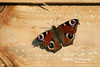 PEACOCK-BUTTERFLY-2-9-10-MILDENHALL (Benn P George Photography) Tags: rafmildenhall 2910 bennpgeorgephotography mc130p 660215 mc130h 870023 sunsets c130e 621851 harvest 74747uf atlasair n498mc peacockbutterfly
