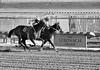 "2017-12-26 (70) r5 Weston Hamilton on #3 Tiz Surprised (on the inside) - monochrome (JLeeFleenor) Tags: photos photography ""laurel park"" maryland md ""maryland races"" horse jockey جُوكِي ""赛马骑师"" jinete ""競馬騎手"" dżokej jocheu คนขี่ม้าแข่ง jóquei žokej kilparatsastaja rennreiter fantino ""경마 기수"" жокей jokey người horses thoroughbreds equine equestrian cheval cavalo cavallo cavall caballo pferd paard perd hevonen hest hestur cal kon konj beygir capall ceffyl cuddy yarraman faras alogo soos kuda uma pfeerd koin حصان кон 马 häst άλογο סוס घोड़ा 馬 koń лошадь laurelpark marylandraces races outdoors outside winter cold"