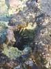 Sian Ka'an (This is Awkward) Tags: mexico christmas quintanaroo tulum siankaan biosphere beach urchin uni