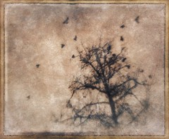 Birds n tree #tintype #effexy #snapseed #stackables #rippix #formulas #retro #textures #texture #birds #artistry_flair (harrysonpics) Tags: tintype effexy snapseed stackables rippix formulas retro textures texture birds artistryflair