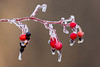 Frosty Berries (JohnReynolds2012) Tags: 2018 inaturalist vancouver canada winter plants bc coquitlam britishcolumbia ca