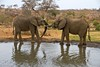 Elephants at watering hole (M_Hauss) Tags: elephant elephants bush krueger krüger africa southafrica afrika südafrika bushveld safari
