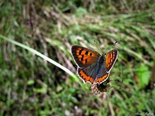 Butterfly 1545