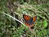 Butterfly 1545 (+1000000 views!) Tags: butterfly borboleta farfalla mariposa papillon schmetterling فراشة