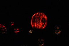 IMG_6536 (comtrag) Tags: jackolanterns rogerwilliamszoo rhodeisland halloween pumpkins pumpkincarving