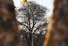 Tree... through a tree (Pthomaz) Tags: tree treeception inception through effect blurry close up vintage brown nature trees perspective awesome framed frame nikon d7500