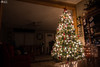 Christmas Tree in Living Room Casual Real Life Home Holiday (HunterBliss) Tags: background ball beautiful box bright card celebration christmas closeup december decor decorated decoration design festive fire fireplace gift gifts gold golden green holiday home house illuminated interior light lights merry nature new night ornament postcard red room season seasonal shiny sparkle texture traditional tree warm white winter xmas year yellow