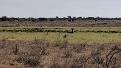 2017-12-28 15.30.29 (dcwpugh) Tags: travel nairobi kenya safari nairobinationalpark