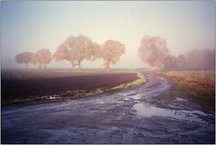 Novembermorgen V (Ulla M.) Tags: dorsten feld november nebel fog bäume trees olympusxa selfdeveloped selbstentwickelt 35mm kleinbild reflectaproscan10t umphotoart rangefinder analog analogue