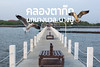 นกนางนวลที่บางปู คลองตาก๊ก (comzine69) Tags: bangpu samutprakan seagull tambonbangpu changwatsamutprakan thailand th