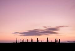 Short Purple Cloud (ajecaldwell11) Tags: xe3 awatoto sunrise ankh purple dawn celestialcompass fujifilm light hawkesbay newzealand napier silhouette sky ateaarangi pou caldwell clouds water