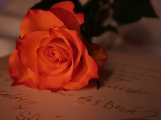 The Letter and the Rose - Macro Mondays - Lit by Candlelight