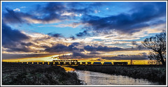 Pymoor Golden Sand (Jim the Joker) Tags: 66750 class66 generalmotors gbrf pymoor ely sand middletontowers gooleglassworks 6e88 hundredfootdrain fens cambridgeshire sunset railway freight train