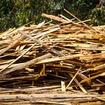Timber production thumbnail
