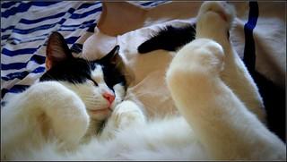 ... pfff, les Fêtes, profitons d'une sieste !