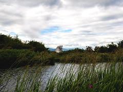 Kelpies, Helix Park (SueGervais) Tags: écosse scotland falkirk kelpies helix park horse