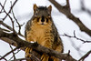 You looking at me? (DjOOF) Tags: nature winter critter tree branches squirrel snow