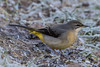 Grey Wagtail (queeny63) Tags: elements
