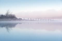 Miroir mon beau miroir... (Bertrand Thiéfaine) Tags: d750 automne brume champtoceaux leverdujour matin nikon paysage épis arbuste loire fleuve rivage berge