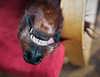 It's Monday. Relax and smile! :-) (Petr Horak) Tags: škvorec středočeskýkraj czechia cze teeth dog domestic dof hair pet