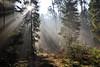 Eclat de lumière en forêt (Excalibur67) Tags: nikon d750 sigma globalvision 24105f4dgoshsma paysage landscape forest foréts arbres trees lumière automne autumn vosgesdunord