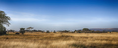 My Favourite Landscape (AnyMotion) Tags: panorama morukopjes kopje felsformation felseninseln savannah savanna savanne landscape landschaft 2015 anymotion serengetinationalpark tanzania tansania africa afrika travel reisen nature natur wildlife 7d2 canoneos7dmarkii landschaftsaufnahmen