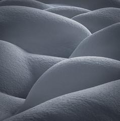 Slumber (David Young - LandscapeExposure.com) Tags: minimal landscape canadianrockies canada snow abstract d810