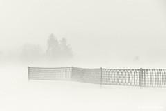 Blizzard (GerWi) Tags: schneesturm blizzard sturm wind fz1000 schneefangzaun bäume landschaft flickrsnow landscape white weis winter
