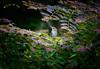 DSC_4529 (melvhsc100) Tags: bird bokeh park greenery garden marinasataybythebay flowers leaves plant nikon7200 tamron150600mm discovery