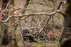 Camouflage (Claudio Nichele (@jihan65 on Twitter)) Tags: nature woods tree arbre forêt bois belgique belgio belgie belgium boschi bosco foam mousse