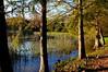 December Lake View (npbiffar) Tags: grass tree water lake wood park sky forest npbiffar wideangle 1685mm d7100 nikon bird landscape