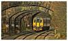 Counting bridges (david.hayes77) Tags: 156415 class156 metrocammell belper derbyshire 2017 midlandrailway bridges arches cutting 2a30 mr emt eastmidlandstrains sprinter supersprinter ambervalley