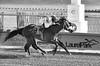 "2017-12-26 (64) r2 Elvis Trujillo on #8 No More Excuses - monochrome (JLeeFleenor) Tags: photos photography ""laurel park"" maryland md ""maryland races"" horse jockey جُوكِي ""赛马骑师"" jinete ""競馬騎手"" dżokej jocheu คนขี่ม้าแข่ง jóquei žokej kilparatsastaja rennreiter fantino ""경마 기수"" жокей jokey người horses thoroughbreds equine equestrian cheval cavalo cavallo cavall caballo pferd paard perd hevonen hest hestur cal kon konj beygir capall ceffyl cuddy yarraman faras alogo soos kuda uma pfeerd koin حصان кон 马 häst άλογο סוס घोड़ा 馬 koń лошадь laurelpark marylandraces races outdoors outside winter cold"