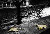 Gennaio... (Renato Pizzutti) Tags: francia parigi paris foglie gennaiofreddo gelo senna fiume albero nikond750 renatopizzutti