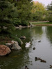 Faux swans, Japanese Friendship Garden of Phoenix (Distraction Limited) Tags: japanesefriendshipgardenofphoenixarizona rohoen japanesefriendshipgarden botanicalgardens gardens phoenix arizona friendshipgarden20180102 koipond