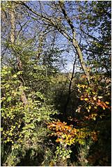 monschau 39 (beauty of all things) Tags: eifel monschau herbst autumn flora wald forest