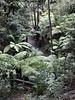 australian national botanic garden-50 (billdoyle[mobile]) Tags: australiannationalbotanicgarden act garden botanicgarden australia australiancapitalterritory anbg canberra australian billdoyle canberratripdec17jan18